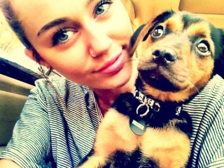 Miley Cyrus - Miley and her dogs