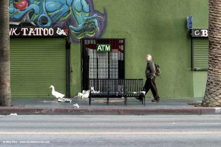 Philip Baker Hall Arthur () and Duck on Hollywood Boulevard. Photo credits by Mark Lampert