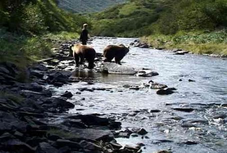 Timothy Treadwell  and the grizzly bears of the Alaskan wilderness. Photo credit: