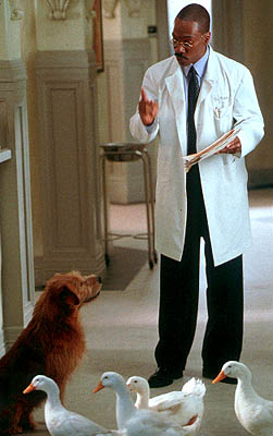 Norm MacDonald Eddie Murphy as Dr. Dolittle, making a point to his dog Lucky (voiced by ) as some ducks wander by in 20th Century Fox's Dr Dolittle 2 - 2001