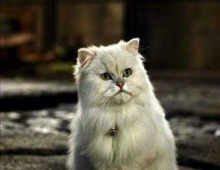Snowbell (voiced by Nathan Lane), the curmudgeonly cat with an attitude, has warmed up in his own way in Stuart Little 2 - 2002