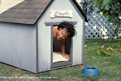 Rob Schneider Marvin () seeks shelter in the neighbor's doghouse in the Revolution Studios/Columbia Pictures release, The Animal - 2001
