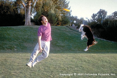 Rob Schneider Marvin Mange () unsuccessfully ignores his newly inherited animal instincts as he outshines a frisbee-catching dog in the Revolution Studios/Columbia Pictures release, The Animal - 2001