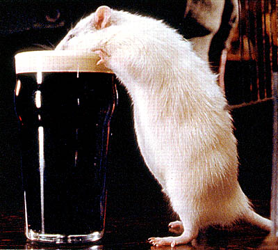 Rat Hubert Flynn (Pete Postlethwaite) has magically become a white rat, but still craves his beer in Universal Focus'  - 2001