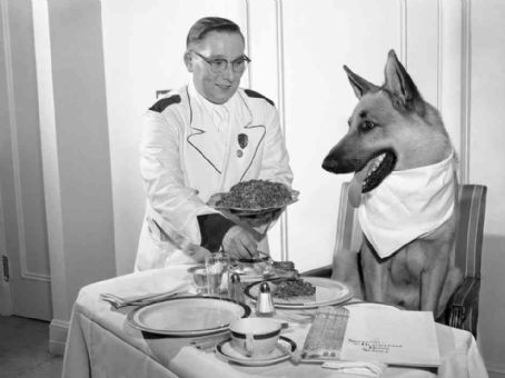 Rin Tin Tin 's Gourmet Dinner